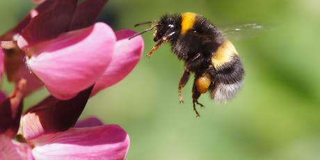 Workshop: Bees Glorious Bees tickets