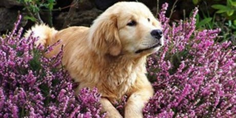 Aromatherapy for Pets:  Blends and Benefits tickets