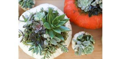 9/23 - Sip & Succulent Pumpkin@ Hidden Vine Bistro, Marysville
