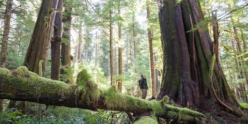 The Future of BC's Ancient Forests