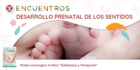 Desarrollo Prenatal de los Sentidos entradas