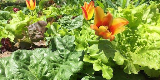 Garden as an Ecosystem