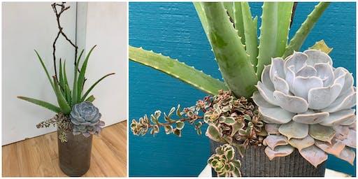 Workshop: Tall & Modern Succulents