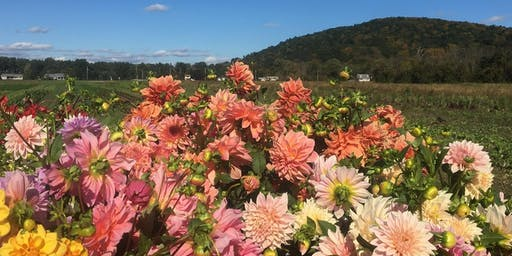 U-Pick Dahlia and Arrange with Your Blooms Workshop