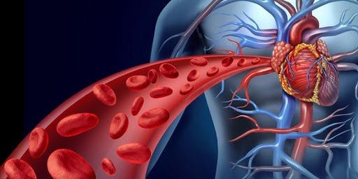 River of Life: The Importance of Good Blood Flow