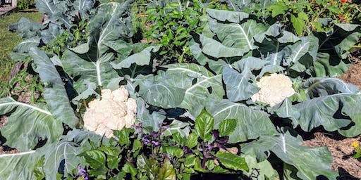 Planning your Fall veggie garden with Fred