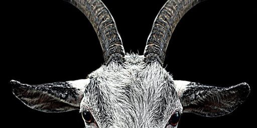 Elizabethan Goats Are Evil