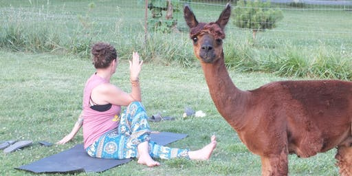 Alpaca Yoga at Montrose Farms