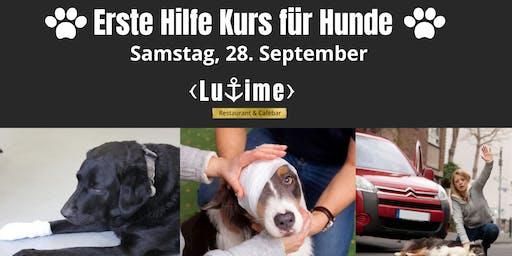 Erste Hilfe Kurs für Hunde in Ludwigshafen