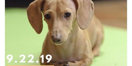Downward Dachshund - Yoga with Adoptable Dogs! tickets