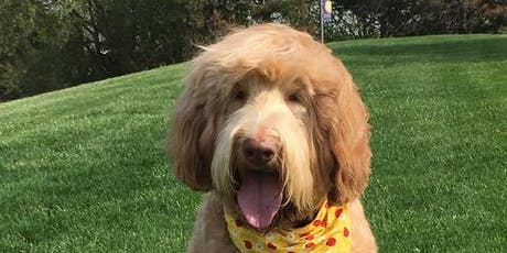 Sydney - The Therapy Dog tickets