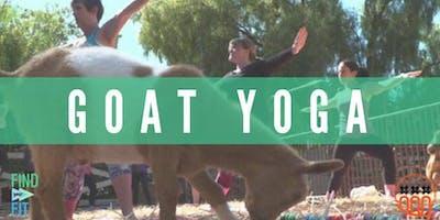 Amsterdam Goat Yoga