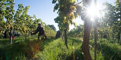 Soirée de dégustation des vins du Domaine viticole du Chapitre à Nivelles