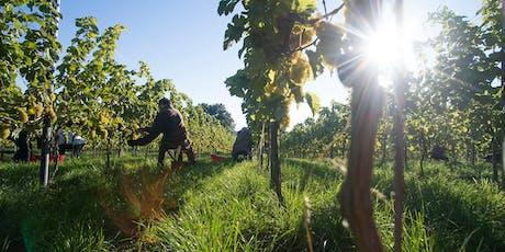 Soirée de dégustation des vins du Domaine viticole du Chapitre à Nivelles  billets