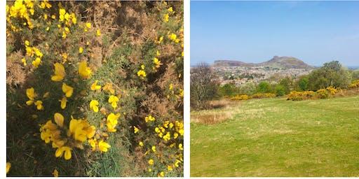 Netwalking Scotland: Hermitage of Braid and Blackford Hill