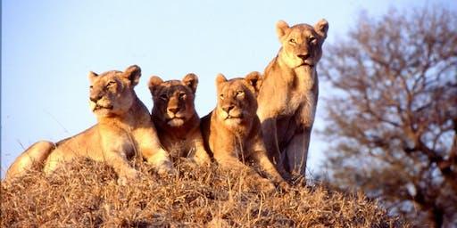 African Safari - 6pm, Tuesday 24th September - Modbury