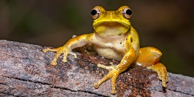 NaturallyGC  Amazing world of Frogs