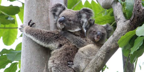 NaturallyGC Koala Conservation Walk tickets