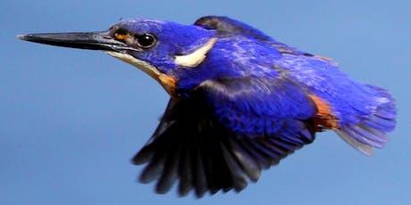 NaturallyGC Birds of the Bush Photography Walk tickets
