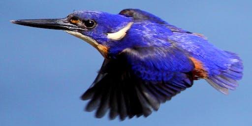 NaturallyGC Birds of the Bush Photography Walk