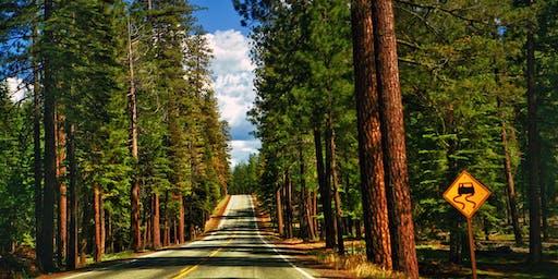 Oregon Redwoods Van Tour