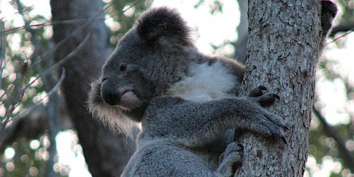 NaturallyGC Koala Tree Planting