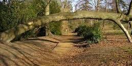 Mindful Walk Lily Hill, Bracknell