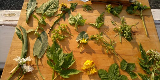 Autumn wild herbal medicine making Exeter