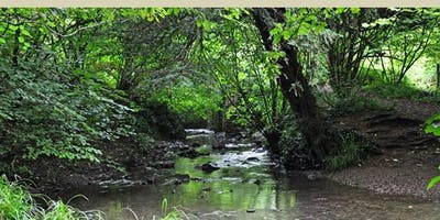 Nature Walk around under-explored Bristol - Avon Needs Trees Fundraiser