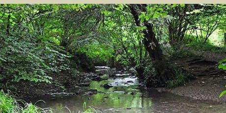 Nature Walk around under-explored Bristol - Avon Needs Trees Fundraiser tickets