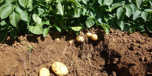 Organic potato workshop. Growing without Copper.