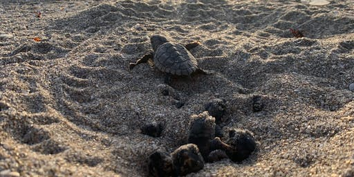 Sea Turtle Nest Excavation with Inwater Research Group
