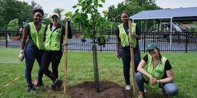 Volunteer: Community Tree Planting - Virginia Ave. Park