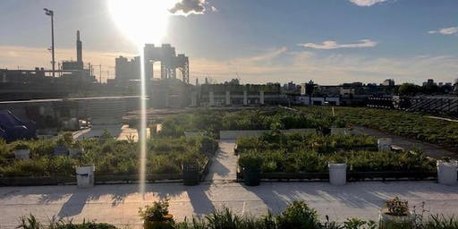 NYC Parks Department's Five Borough Building Green Roof Tour