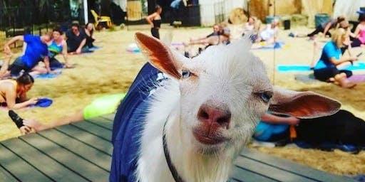Light Up Night Goat Yoga Richardson!