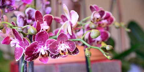 Taiwan: A World of Orchids 2019 tickets