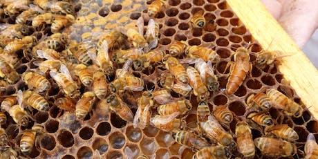 Beginning Beekeeping Class tickets