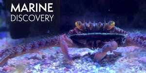 Marine Discovery Workshop Request