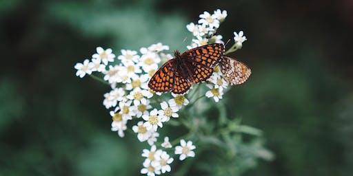 Les insectes, nos amis et les autres
