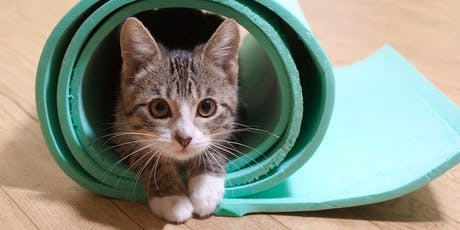 Kitten Yoga to Benefit the AWLA tickets