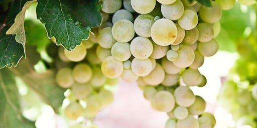 Sunday Yoga & Wine: at Ward Johnson Winery with Jen Tucker