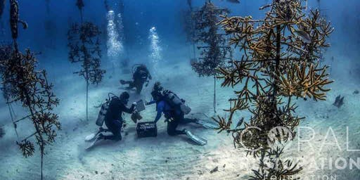 SCUBA Diving to Restore Coral in Key Largo