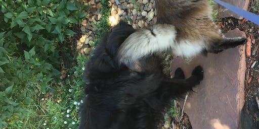 Intro and Intermediate Animal Communication Sept 6-8 2019