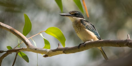 Darebin Creek Bird Survey tickets