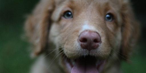 Monday Puppy Class