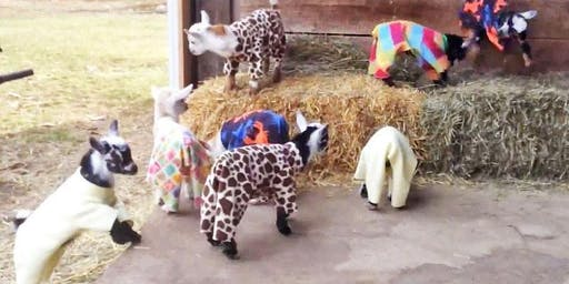 Baby Goat Yoga Pajama Party by Lavenderwood Yoga at Eden Gardens