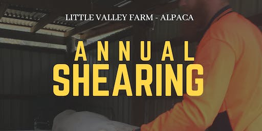 Alpaca Shearing Weekend at Little Valley Farm - Alpaca Farm Laguna NSW