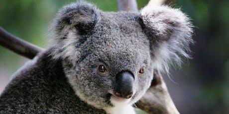 Narrandera Koala Count 2019 tickets