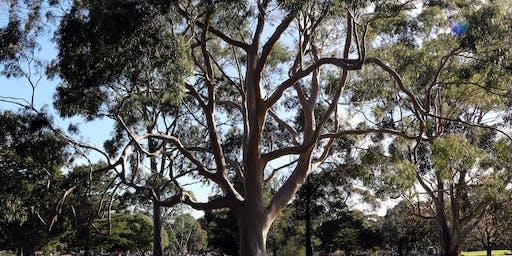 Tree Tour at Springvale Botanical Cemetery