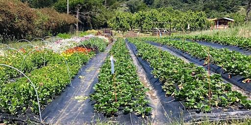 Forever Bloom Farm - Farm Tour – Pescadero, CA – 3/28/20